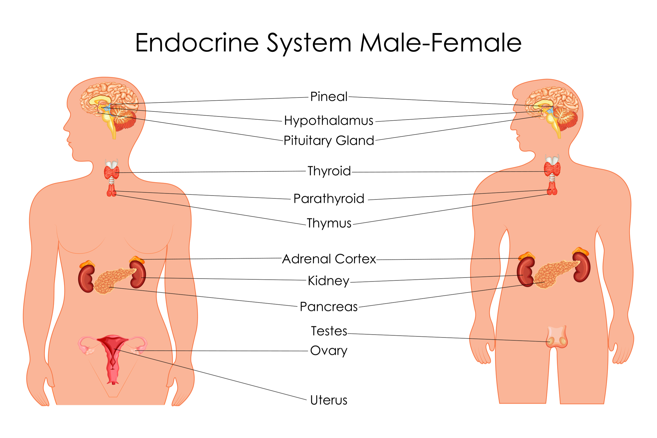 physiotherapy images for presentations endocrine system sydney clinics physiotherapists